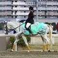 川崎競馬の誘導馬04月開催 桜Verその2-120409-13-large