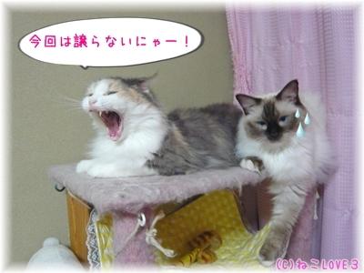めい&モモ5
