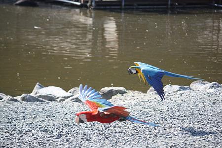 掛川花鳥園 H22.11.16 8