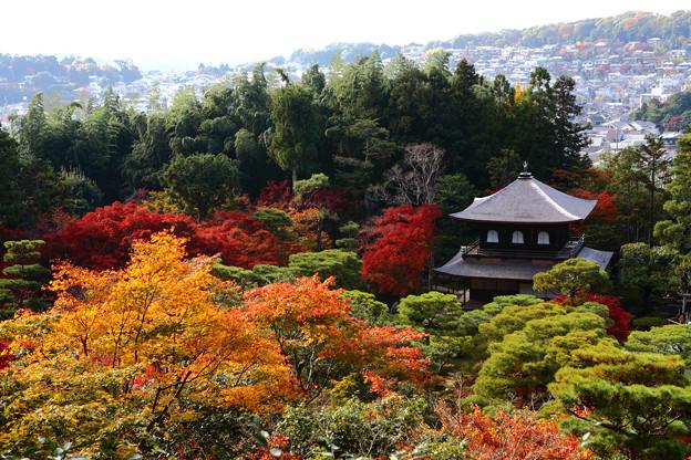 Photos: 『染まる銀閣寺。。。』