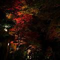 『秋の道標。。。』~京都 貴船神社~