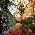 写真: 『秋の絨毯。。。』