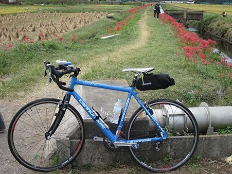我自転車と彼岸花 まだまだ続く。