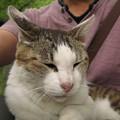 Photos: ひざのり猫