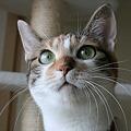 Photos: 猫のホームズ