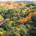 写真: 砦から秋満開