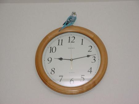 インコ時計??