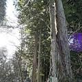 二つの木の合体。