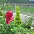 写真: 電子メールで送信: IMG_0783, IMG_0787, IMG_0788, IMG_0792, IMG_07934