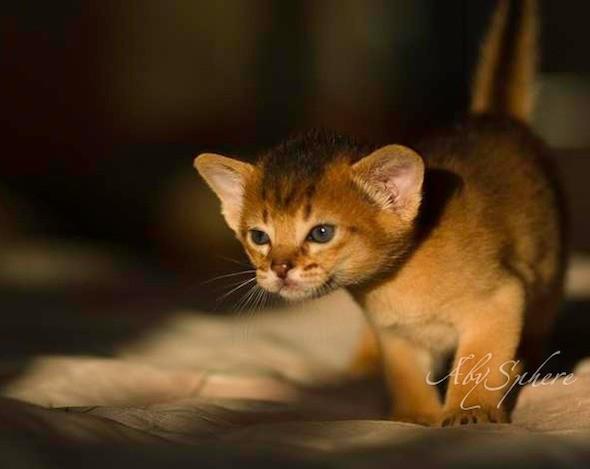 kitten1026_08