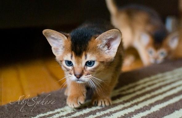 kitten1026_10