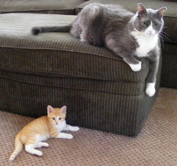 kitten1035_09