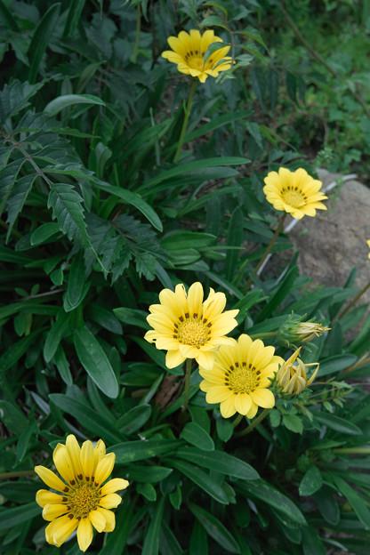 Photos: Flower07022011sd15-06