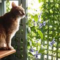 Photos: 雨の日の窓辺