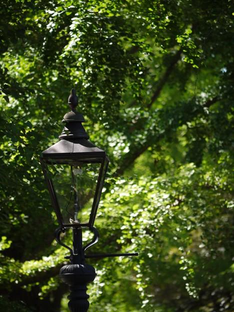緑の中のガス灯