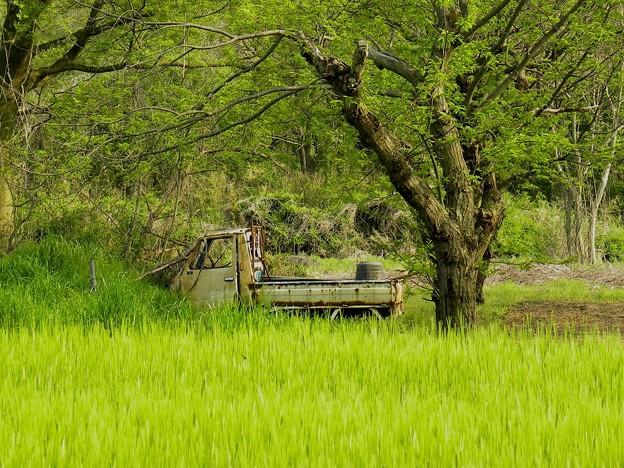 Photos: 軽トラのある風景 ~放置車~