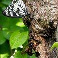 Photos: 樹液に群がる虫達