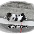 Photos: お散歩~♪