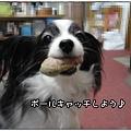 Photos: ボールキャッチしよ