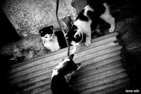 街猫38-おまけ1