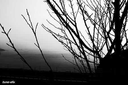 冬の海を眺めた