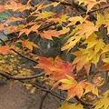 Photos: 冬枯れの紅葉