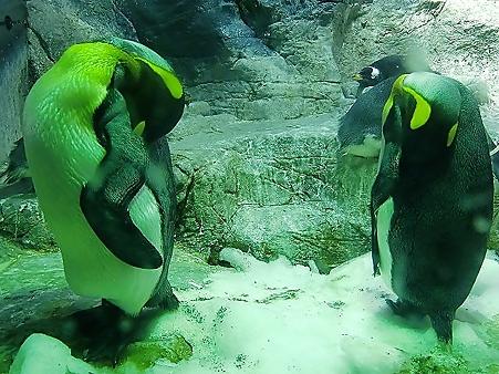 夜のペンギン2295