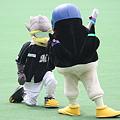 Photos: クール(COOL)とつば九郎