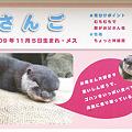 Photos: hirakata110917043