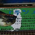 Photos: katurahama110311003