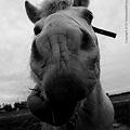 Photos: horse