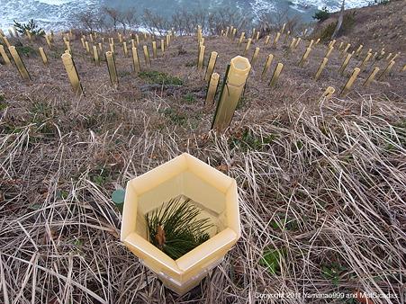 海岸防災林造成事業
