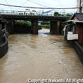 写真: 増水した川と民家