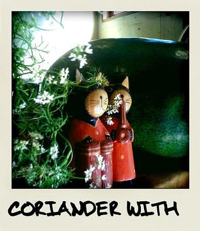 コリアンダーと猫と冬瓜