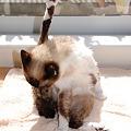 写真: 毛繕いに夢中でアンヨがピーン