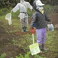 秋の芋掘に行くかDSCN2588