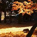 Photos: 日向