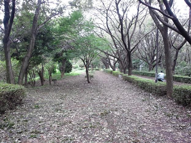 写真: 110923 尾根緑道