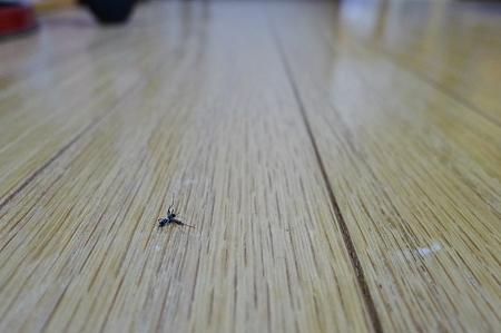 蚊が落ちてる