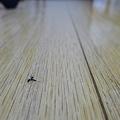 Photos: 蚊が落ちてる