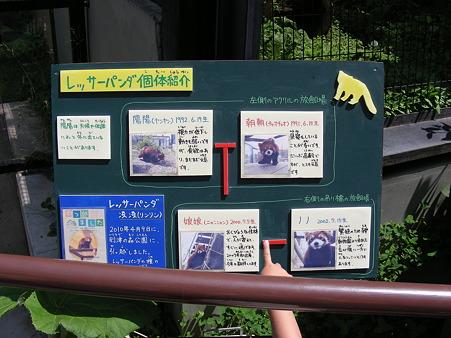 レッサーパンダの紹介