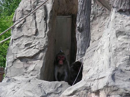 日陰に隠れる猿
