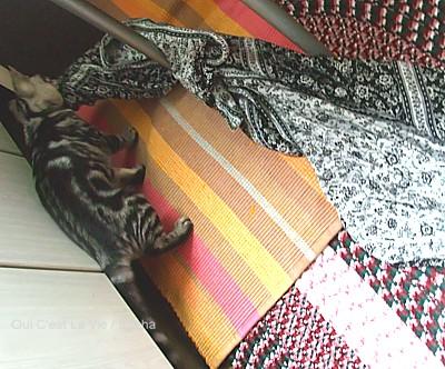 猫巻きスカートを運ぶ。02