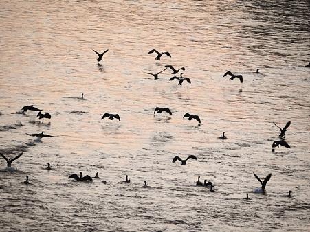 川鵜達の早朝の集い