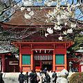 写真: 春 桜のある景色