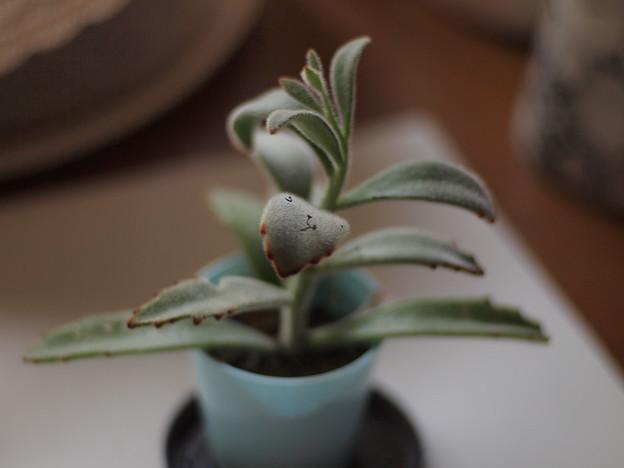 観葉植物?
