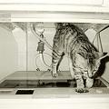 写真: Doing Laundry__Aug 1996