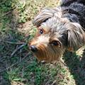 Photos: Little Puppy of Island