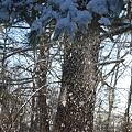 Snow Shaking Off 1-9-11