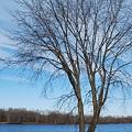 写真: Tree of Life